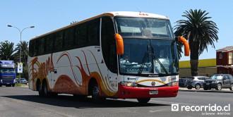 Buses Evans