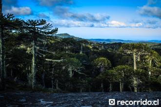 Parque Nacional Nahuelbuta, Angol